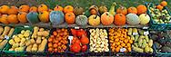 Pumpkins, Sang Lee Farms, Peconic, New York, Long Island, North Fork