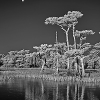 Infrared photo Blue Cypress Lake, Florida daylight with full moon
