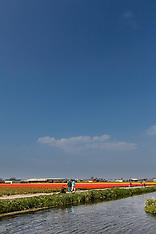 Noordwijk, bollenvelden, Zuid Holland, Netherlands