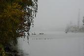 Foggy Lake Washington Ship Canal