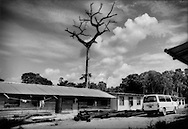 "A dead Kan-Kan tree, sacred to the Maroon people, rises above a housing compound set up by a road paving crew for China Dalian International that are paving the road from Brokopondo to Atjoni deep in the Amazon rainforest, Suriname.  The Maroons never cut down or disturb Kan Kan trees, which are often the centerpiece for their villages.  Many Maroons suggest that the Peoples Republic of China is paving this road in preparation for resource exploitation in the pristine interior rainforests of Suriname, where their ancestors sought shelter as escaped slaves hundreds of years ago...From a communique leaked by Wikileaks, the US Embassy says, ""The Chinese company Dalian (China Dalian International) is very active in road building in Suriname.  Some ministries reportedly prefer to work with the Chinese in order to receive what is perceived as complications-free cash-flow, while others worry about long-term effects (and political liabilities) of such hasty deals.  The Chinese, meanwhile, have their eyes on Surname's rich natural resources, particularly wood"".  China Dalian International recently paved the road that roughly follows the Suriname River straight inland to the jungle outpost Atjoni, which many believed was the first step to build a road to Brazil opening up the interior.  In a conversation with a Da Ware Tijd Newspaper staff writer, Eleazer Pross, a Memoranda of Understanding signed on 2 December 2010 between the government of Suriname and the Peoples Republic of China was voted down in the legislature here.  China had offered US$ 6 billion in projects to build a railroad, or road (it was never clearly stated to the public which it was) and a deep sea harbor in Paramaribo.  This would have opened up one of the world's largest untouched rainforest wildernesses to rapid encroachment along the path of the railroad/road.  Eleazer Pross said today, ?the Chinese demands were basically too much.  They basically demanded the entire (interior) forest (for logging) as co"