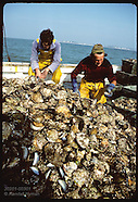03: OYSTERS RESEARCH ON NATIVES