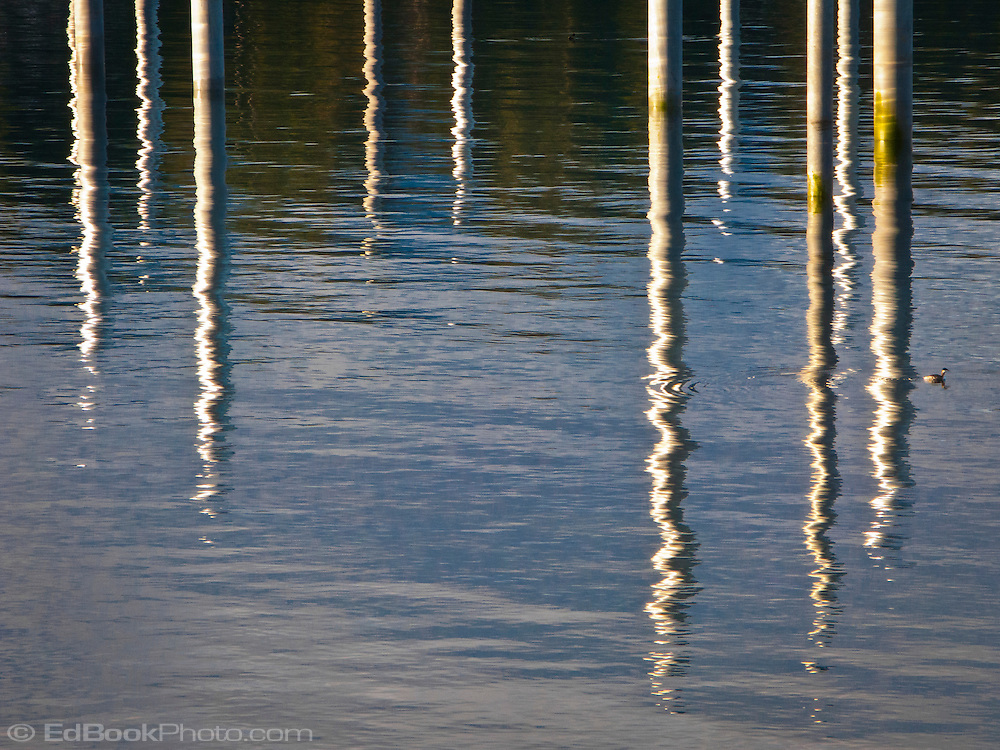 pilings of the new Seabeck Marina construction reflections in Seabeck Bay Kitsap Peninsula on the Hood Canal of Puget Sound, Washington, USA