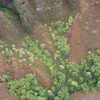 Aerial view taken from a helicopter directly above gorge/canyon in Hawaii, showing curious x-formation of trees on canyon floor