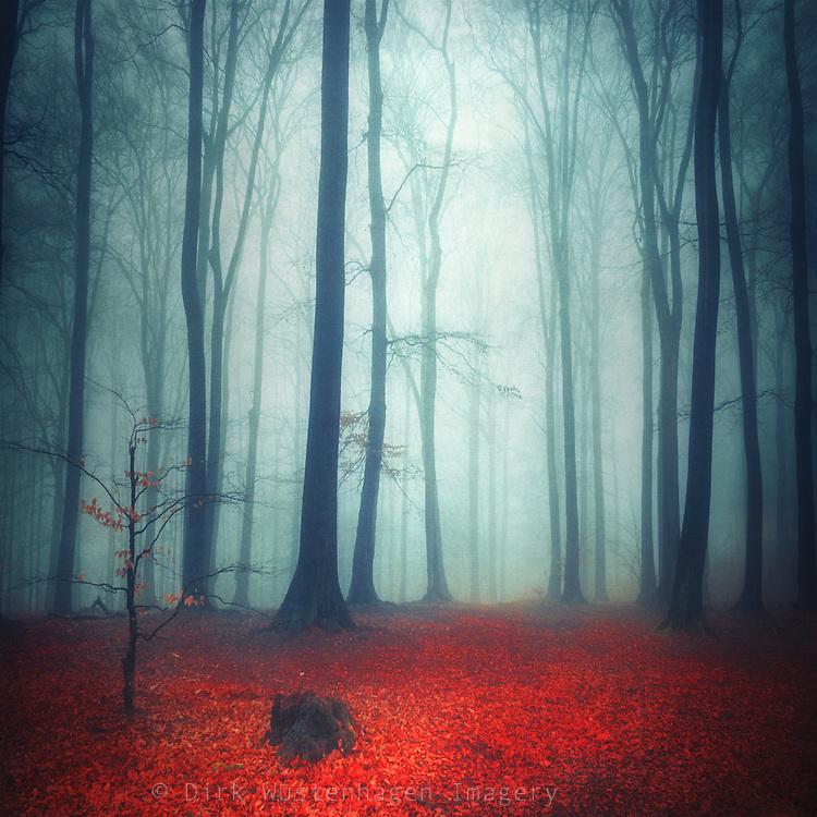 Foggy forest on a rainy autumn day - texturized photograph<br /> <br /> Prints: http://society6.com/DirkWuestenhagenImagery/on-the-mend-egF_Print#1=45