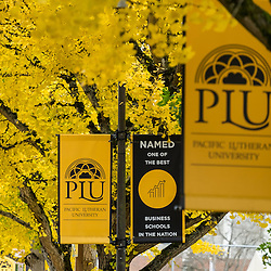 Banners in the fall color at PLU, Tuesday, Oct. 25, 2016. (Photo: John Froschauer/PLU)