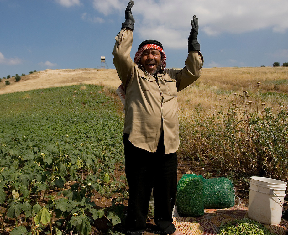 Ce fermier Jordanien cultive le gombo, un légume originaire d'Afrique, sur les hauteurs des collines face au Golan. Sa seule ressource en eau est la pluie ou la gr?ce d'Allah comme il dit. Jordanie, mai 2011
