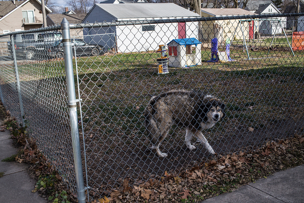 A dog is fenced in a yard on Monday, November 12, 2012 in Webster City, IA.