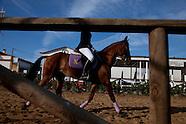 Sports - Golegã traditional Horse Fair