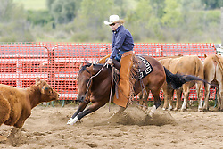 Cutting horse and rider in competition.<br />