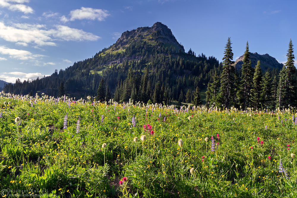 Wildflowers and Yakima Peak from Upper Tipsoo Lake at Mount Rainier National Park in Washington State, USA