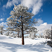 Often considered a summertime destination, Bryce Canyon National Park in southern Utah is even more breathtaking in winter, covered in snow. The red rocks in contrast with the white snow and blue skies, make this natural wonder a must-see for tourists traveling through southern Utah. Bryce Canyon park rangers offer free guided snowshoeing tours.