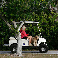 BOCA GRANDE, FL -- January 3, 2008 -- A dog gets a lift on a golf cart, the main mode of transportation for residents in the community, in Boca Grande, Fla., on Saturday, January 3, 2008.  Boca Grande is a small Old-Florida community on Gasparilla Island, with no traffic lights, billboard or condo development, which attracts both seasonal and year-round affluent residents.