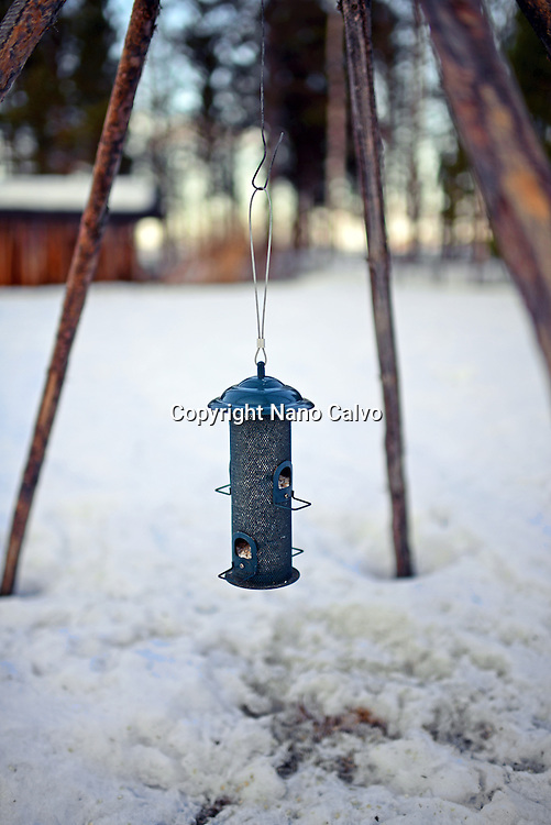 Bird feeder. In the Reindeer farm of Tuula Airamo, a Sámi descendant, by Muttus Lake. Inari, Lapland, Finland