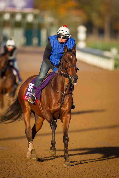 October 29, 2015:  Salutos Amigos, trained by David Jacobson and owned by Southern Equine Stables & David Jacobsen, exercises in preparation for the Breeders' Cup Sprint at Keeneland Race Track in Lexington, Kentucky. Alex Evers/ESW/CSM