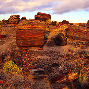 Petrified logs in Petrified Forest National Park, AZ.