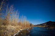 Native cottonwoods line the Truckee River through the McCarran Ranch, where the Truckee River was restored to its original course in 2006.