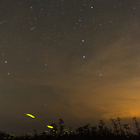 Fireflies glow along the edge of the forest beneath the Big Dipper in the Florida Everglades