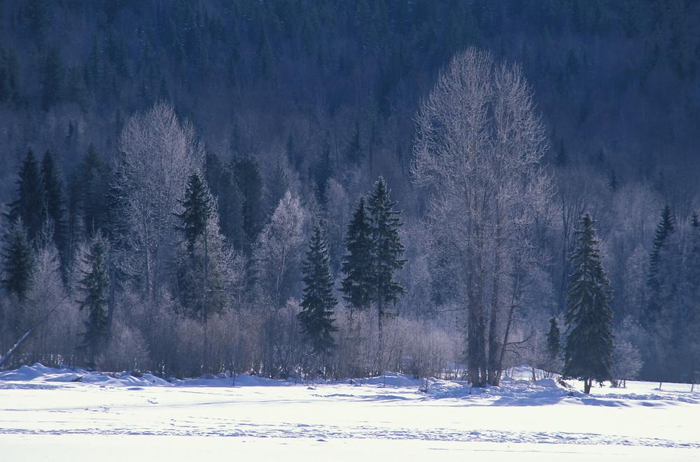 Winter Landscape near , Wells Gray Provincal Park, British Columbia, Canada