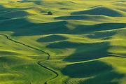 Palouse wheat fields from Steptoe Butte, Washington.