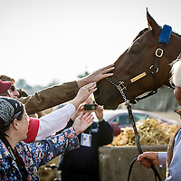 May 03, 2015: Trianer, Bob Baffert brings American Pharaoh to visit fans ant a viewing of the Kentucky Derby winner  at Churchill Downs Louisville Ky. Alex Evers/ESW/CSM