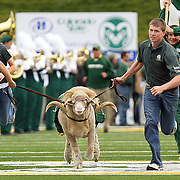 """SHOT 10/27/2007 - Colorado State students run """"Cam"""", the school's mascot, out onto the field during player introductions before their game  against Utah on Saturday October 27, 2007 at Sonny Lubick Field at Hughes Stadium in Fort Collins, Co. Utah won the game 27-3 to improve to 6-3 on the season..(Photo by Marc Piscotty © 2007)"""