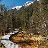 A raised boardwalk winds through colorful protected wetlands, Milford Track, Fiordland, New Zealand