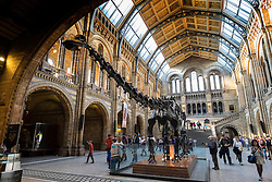 Natural History Museum in London United Kingdom