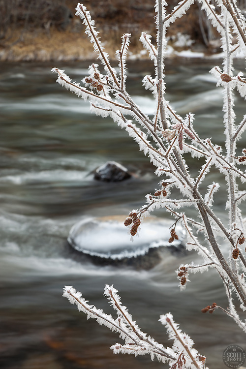 """Frost at the Truckee River"" - This frost covered branch was photographed along the Truckee River."