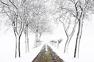 A country road in the country side nearby the town of Pinerolo in Piedmont, Italy, under a heavy snowfall.