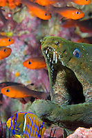 Open Wide---Fine Spotted Moray and Cardinal Fish