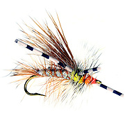 SHOT 3/31/08 9:06:57 PM - Umpqua Feather Merchants fly shot in a studio setting. Fly fishing is a distinct and ancient angling method, most renowned as a method for catching trout and salmon, but employed today for a wide variety of species including pike, bass, panfish, and carp, as well as marine species, such as redfish, snook, tarpon, bonefish and striped bass. In fly fishing, fish are caught by using artificial flies that are cast with a fly rod and a fly line. The fly line (today, almost always coated with plastic) is heavy enough cast in order to send the fly to the target. Artificial flies can vary dramatically in all morphological characteristics (size, weight, colour, etc.). Artificial flies are created by tying hair, fur, feathers, or other materials, both natural and synthetic, onto a hook with thread. The first flies were tied with natural materials, but synthetic materials are now extremely popular and prevalent. The flies are tied in sizes, colours and patterns to match local terrestrial and aquatic insects, baitfish, or other prey attractive to the target fish species..(Photo by Marc Piscotty / © 2008)