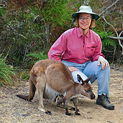 Kangaroo Island Kangaroos (Macropus fuliginosus fuliginosus) roam freely near the Visitor Centre and campground in Flinders Chase National Park, Kangaroo Island, South Australia. Upon landing in 1802, famous explorer Captain Matthew Flinders shot the first Kangaroo Island Kangaroo. Not until the 1990s did taxonomists clarify that it was a subspecies of the Western Grey Kangaroo (Macropus fuliginosus, a large brown marsupial mammal species in the Macropod family, Macropodidae), which lives across the southern part of Australia, from just south of Shark Bay to coastal South Australia, western Victoria, and the entire Murray-Darling Basin in New South Wales and Queensland. It breeds year round with a peak during summer months. Be cautious of kangaroos when driving roads at night. For licensing options, please inquire.