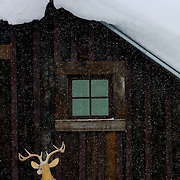 """SHOT 1/12/09 1:59:20 PM - A wooden carved deer rack on the side of a home in Crested Butte, Co. Crested Butte is a Home Rule Municipality in Gunnison County, Colorado, United States. A former coal mining town now called """"the last great Colorado ski town"""", Crested Butte is a destination for skiing, mountain biking, and a variety of other outdoor activities. The population was 1,529 at the 2000 census. The Colorado General Assembly has designated Crested Butte the wildflower capital of Colorado. The primary winter activity in Crested Butte is skiing or snowboarding at nearby Crested Butte Mountain Resort in Mount Crested Butte, Colorado. Backcountry skiing in the surrounding mountains is some of the best in Colorado. The mountain, Crested Butte, rises to 12,162 feet (3,700 m) above sea level..(Photo by Marc Piscotty / © 2009)"""
