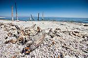 The Salton Sea, california, USA