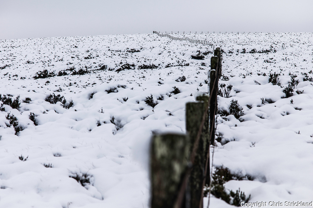 Mozie Law, Cheviot Hills, Anglo Scot Border, UK. 13th December 2015. Heather peaks out of snow either side of the fence line marking the Anglo Scot Border along the Pennine Way on the Cheviot Hill Mozie Law (552m).
