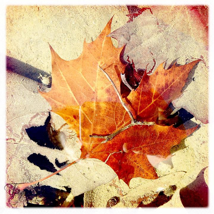 Leaf under water - Dutchess County, New York