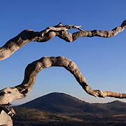 A gnarled, bleached tree frames one of the many cinder cones in the Craters of the Moon National Monument in Idaho.