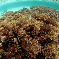 Underwater view of a healthy Caribbean Reef