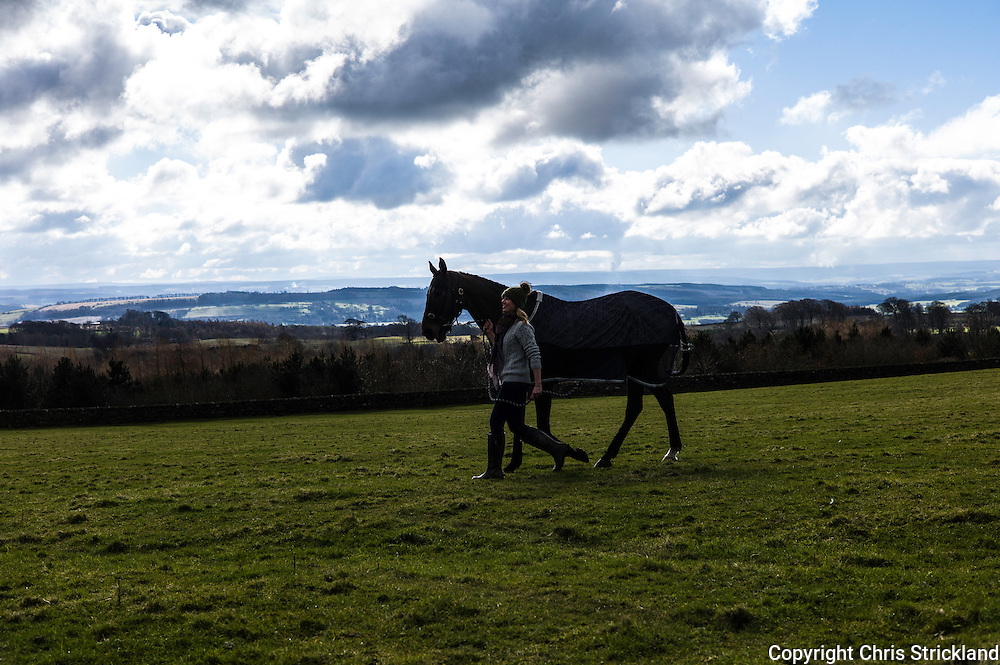 Corbridge, Northumberland, England, UK. 28th February 2016. Oscar Stanley has a walk prior to racing at the Tynedale Hunt annual Point to Point horse racing fixture.