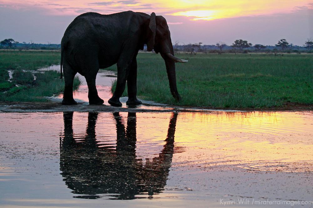 Africa, Botswana, Savute. Elephant reflection in Chobe National Park.