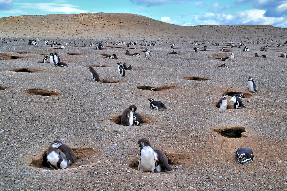 How To Get To Los Pinguinos Natural Monument