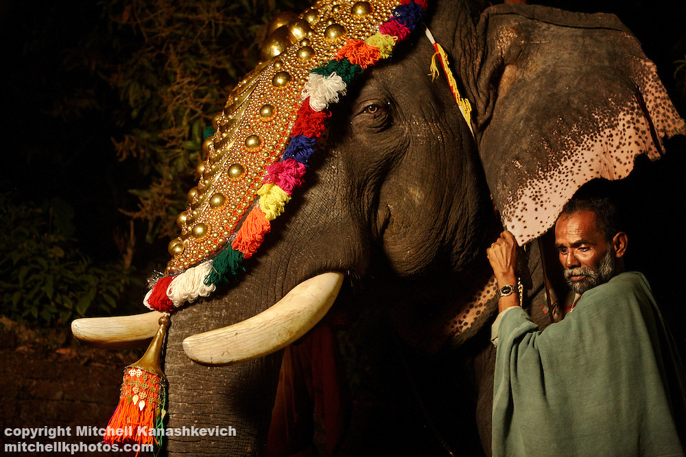 Elephant pooram/pageant on the outskirts of Thrissur (Trichur), Kerala, India,Traditions and culture