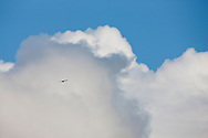 A Red-tailed Hawk (Buteo jamaicensis) soares high into the clouds above San Francisco, California