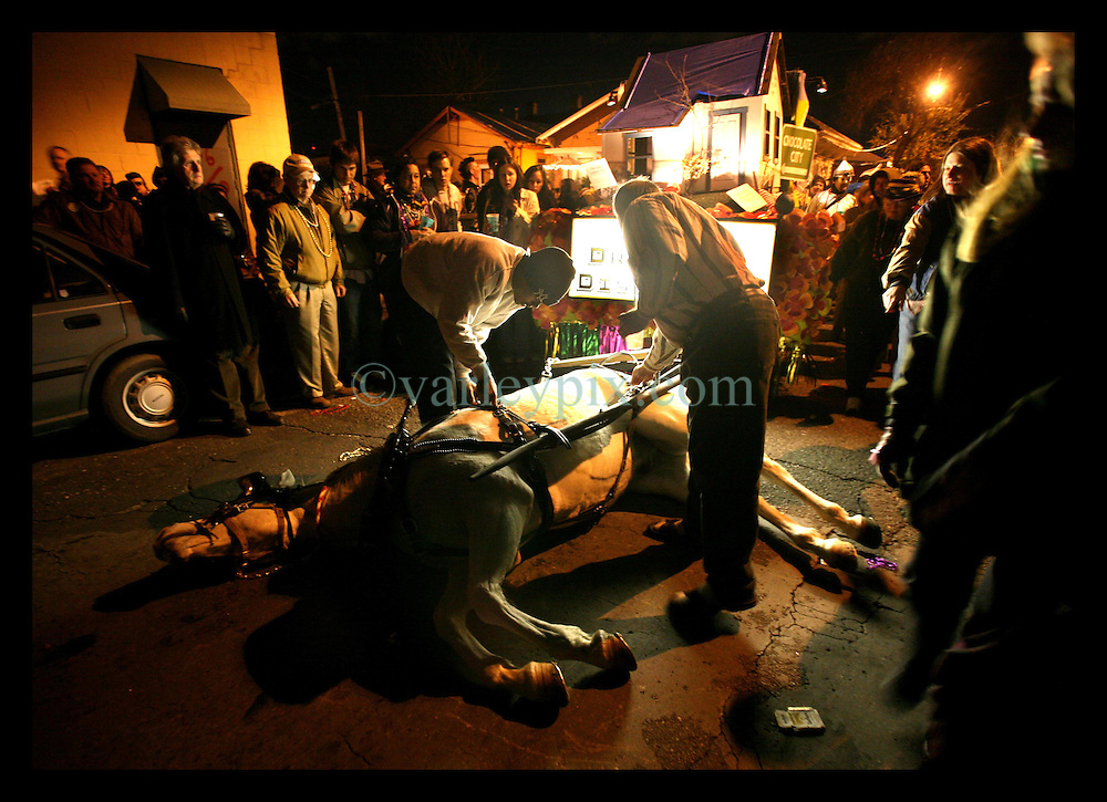 11th Feb, 2006. New Orleans, Louisiana. A horse towing a float falls and is unable to get up as Mardi Gras begins with the traditional walking parade of Krewe du Vieux. Starting in the Faubourg Marigny and winding its way through the French Quarter, thousands of people lined the streets to enjoy one of the things New Orleans does best. A great street party was had by all who attended. Satire abounded in the costumes, poking fun at government and FEMA response to Hurricane Katrina. The horse survived the ordeal and was later able to get up and walk away.