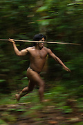 Namo Yate hunting with a lance which is made from the stem of a palm tree. Large terrestrial game like peccaries and tapir are hunted in this way.<br /> Bameno Community. Yasuni National Park.<br /> Amazon rainforest, ECUADOR.  South America<br /> This Indian tribe were basically uncontacted until 1956 when missionaries from the Summer Institute of Linguistics made contact with them. However there are still some groups from the tribe that remain uncontacted.  They are known as the Tagaeri &amp; Taromenane. Traditionally these Indians were very hostile and killed many people who tried to enter into their territory. Their territory is in the Yasuni National Park which is now also being exploited for oil.
