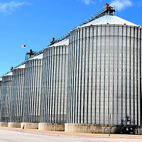 Grain Elevators Storing Malting Barley in Fairfield, Montana<br /> The Golden Triangle is Montana&rsquo;s premier grain area. Fairfield touts itself as the Malting Barley Capital of the World. Their biggest customer is Anheuser-Busch. The brewing company carefully manages the whole process. This includes selling the seed, providing agronomist advice, monitoring the fields, supervising the storage in these grain bins and testing each truckload.