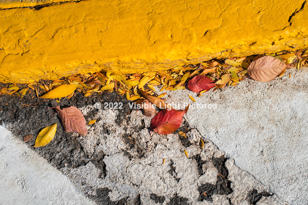 Autumn leaves by a yellow curb.