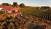 Brooks Estate vineyard, Eola-Amity Hills AVA, Willamette Valley, Oregon