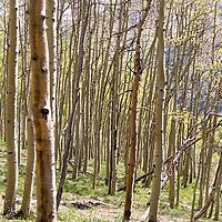 Aspen Stock